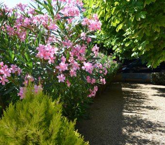 les jardins de l'Hôtel des Alpes Gréoux les Bains 1200